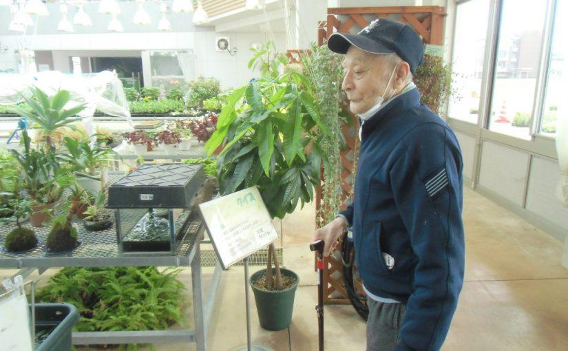 長岡市緑花センター「花テラス」に行って来ました。